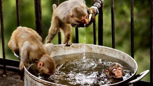 banho_dos_macacos.jpg