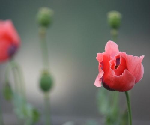 flor_contraste.jpg