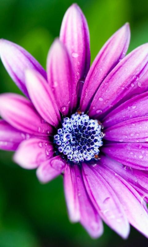 flor_pink.jpg