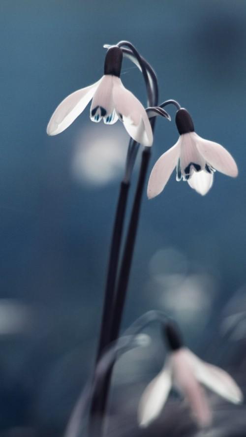 flores_abajur.jpg