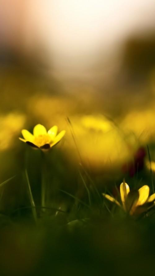 flores_amarelas_em_destaque.jpg