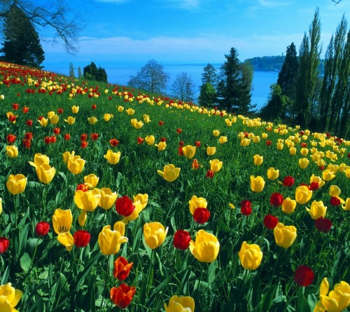 flores_amarelas_vermelhas.jpg