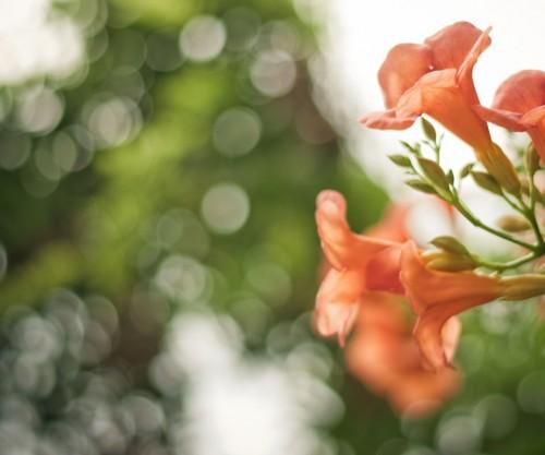 flores_cor_de_laranja.jpg