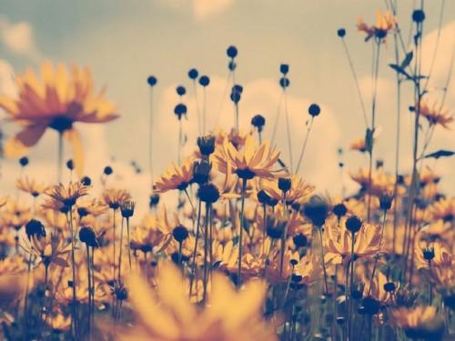 flores_de_verao.jpg