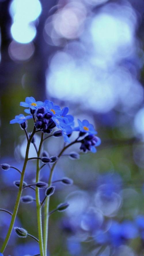 flores_esquecidas.jpg