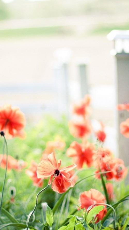 flores_vermelhas.jpg