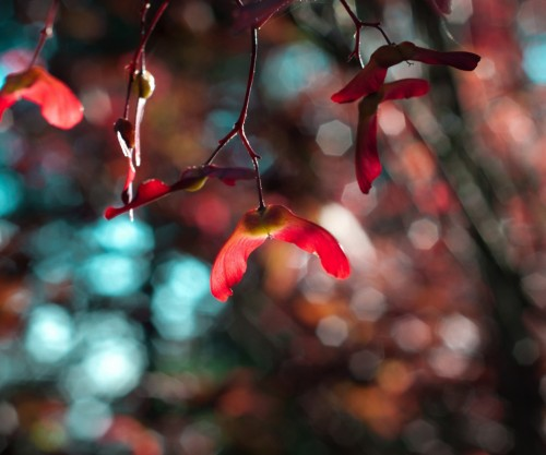 folhas_vermelhas.jpg