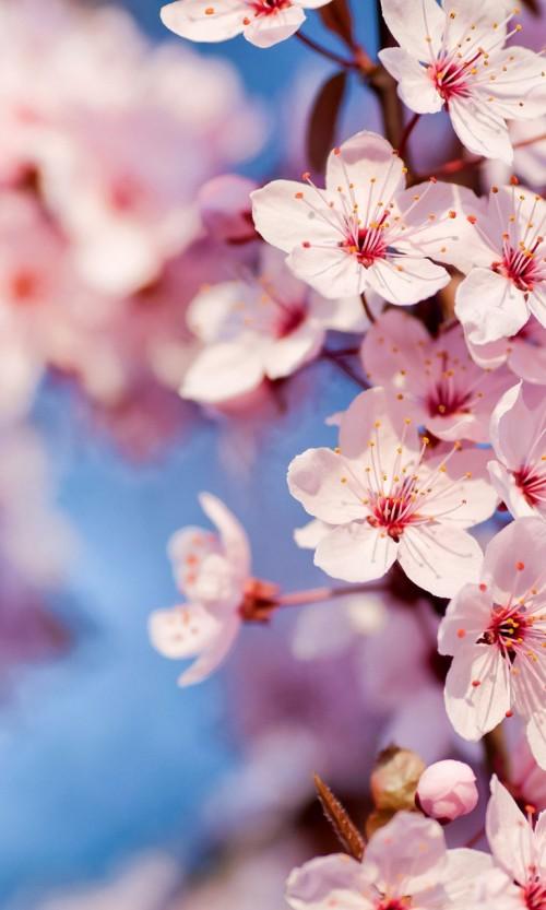 lindas_flores.jpg