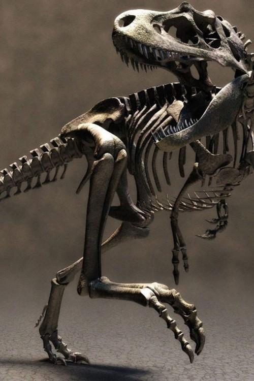 t_rex_esqueleto.jpg