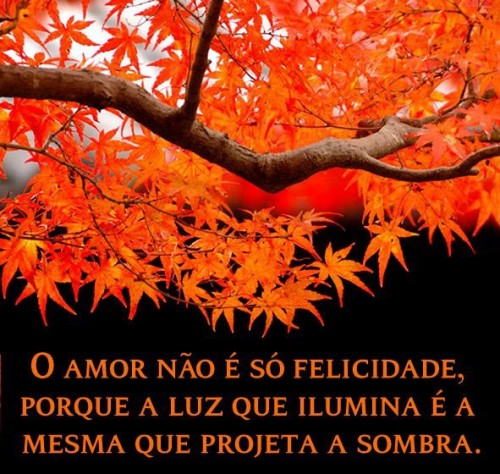 amor_39835.jpg