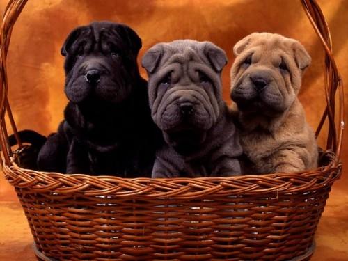 Cachorrinhos.jpg
